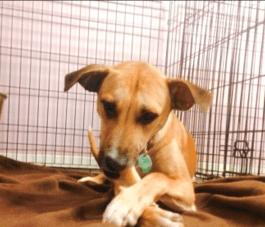 Mission Impawsible Dog Training